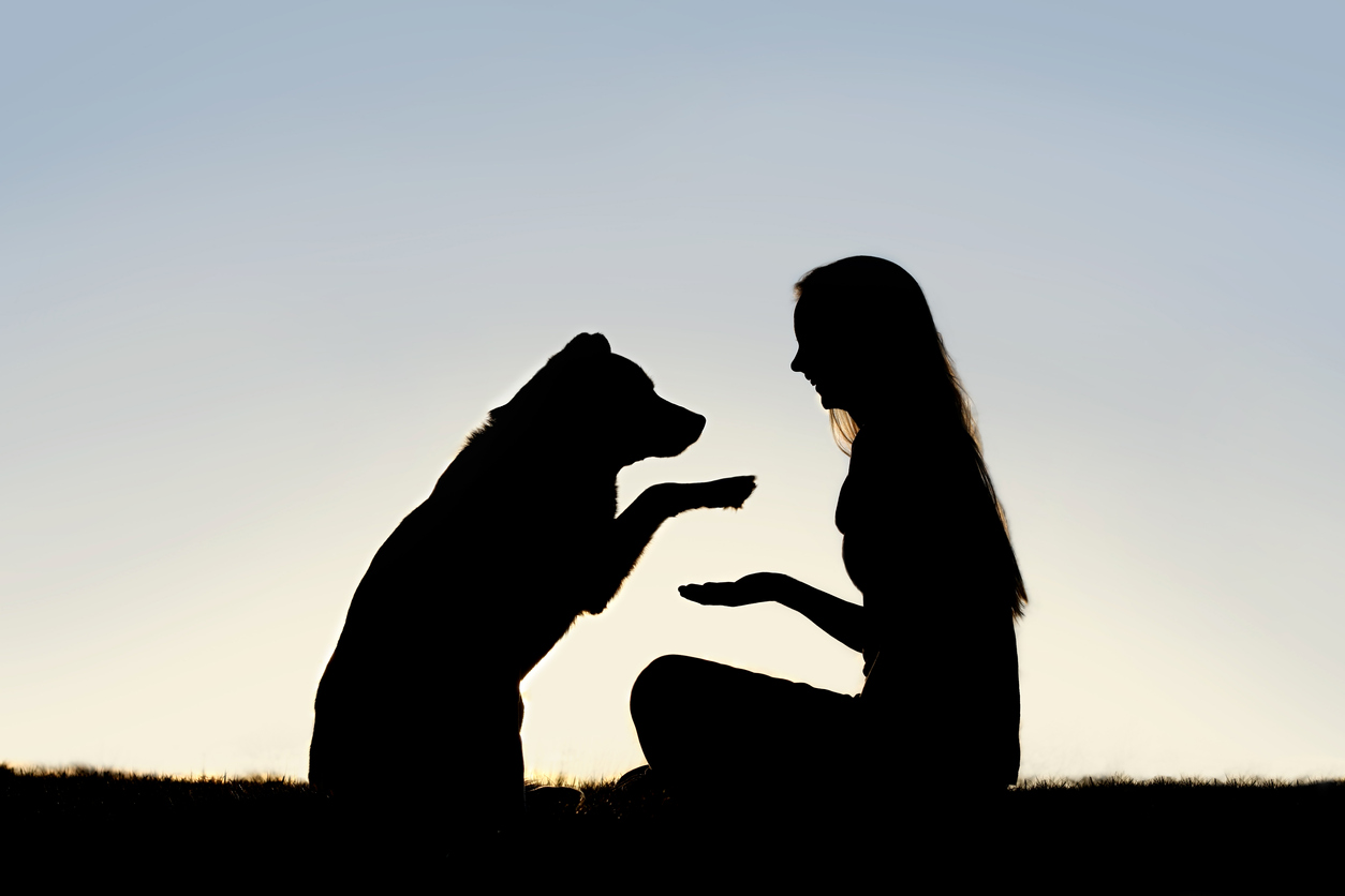 woman and dog shaking hands silhouette